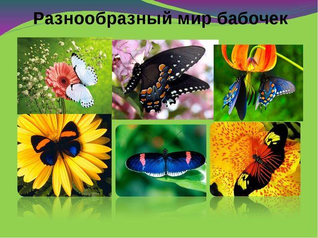 Разнообразный мир бабочек