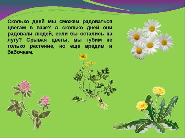Сколько дней мы сможем радоваться цветам в вазе? А сколько дней они радовали...