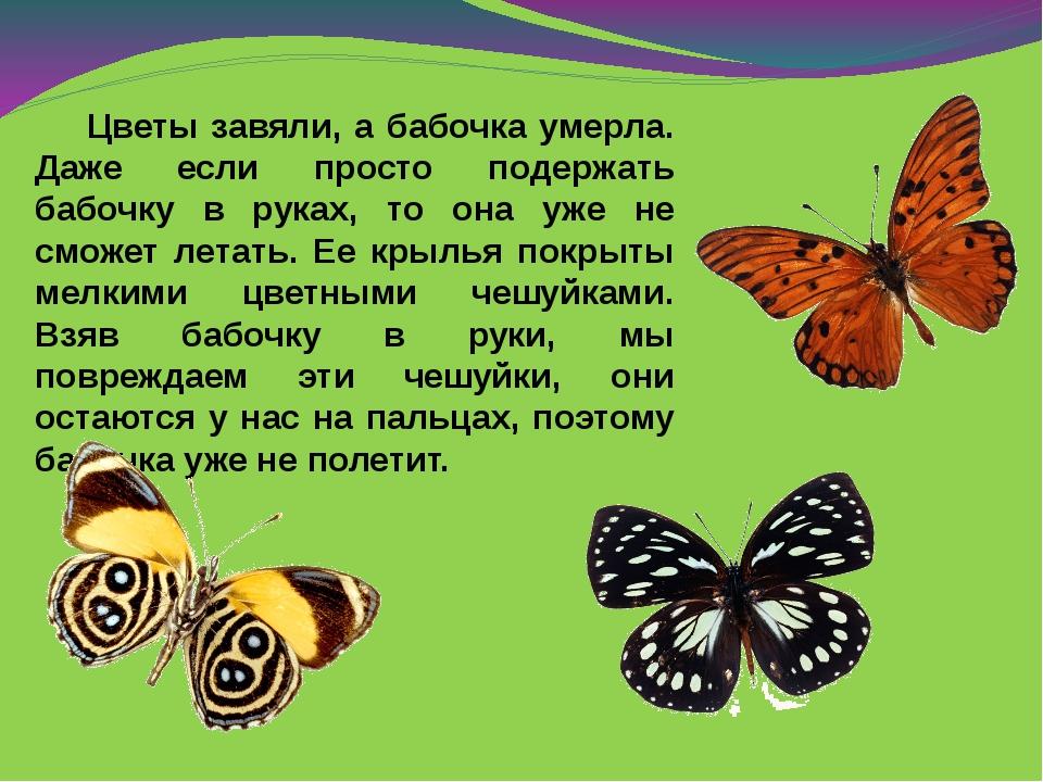 Цветы завяли, а бабочка умерла. Даже если просто подержать бабочку в руках,...
