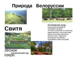 Природа Белоруссии Свитязь – самое красивое лесное озеро Беларуси. Беловежска