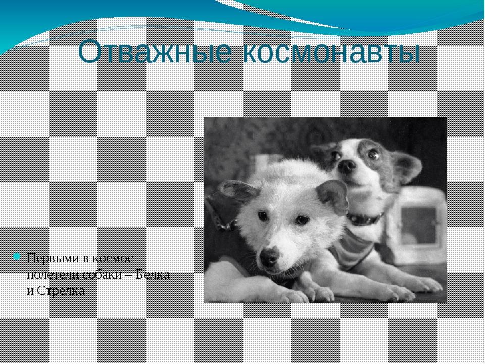 Отважные космонавты Первыми в космос полетели собаки – Белка и Стрелка