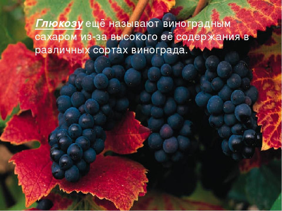 Глюкозу ещё называют виноградным сахаром из-за высокого её содержания в разли...