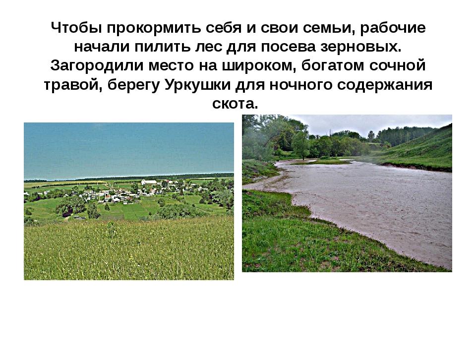 Чтобы прокормить себя и свои семьи, рабочие начали пилить лес для посева зерн...