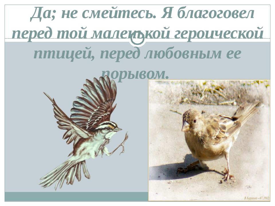 Да; не смейтесь. Я благоговел перед той маленькой героической птицей, пере...