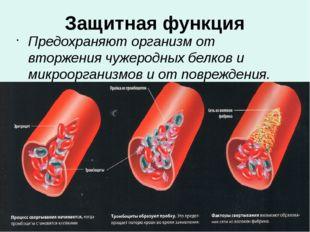 Защитная функция Предохраняют организм от вторжения чужеродных белков и микро
