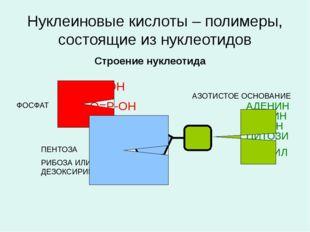 Нуклеиновые кислоты – полимеры, состоящие из нуклеотидов Строение нуклеотида