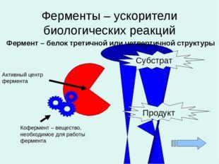 Ферменты – ускорители биологических реакций Фермент – белок третичной или чет