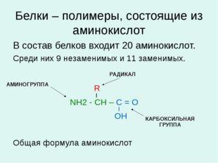 Белки – полимеры, состоящие из аминокислот В состав белков входит 20 аминокис