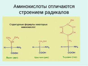 Аминокислоты отличаются строением радикалов Структурные формулы некоторых ами