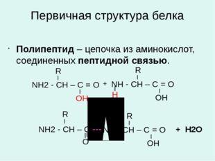 Первичная структура белка Полипептид – цепочка из аминокислот, соединенных пе