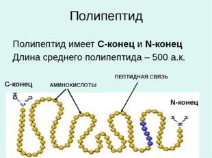Полипептид Полипептид имеет С-конец и N-конец Длина среднего полипептида – 50