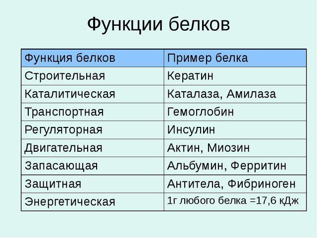 Функции белков Функция белков Пример белка Строительная Кератин Каталитическа...
