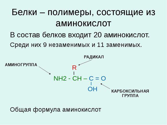 Белки – полимеры, состоящие из аминокислот В состав белков входит 20 аминокис...