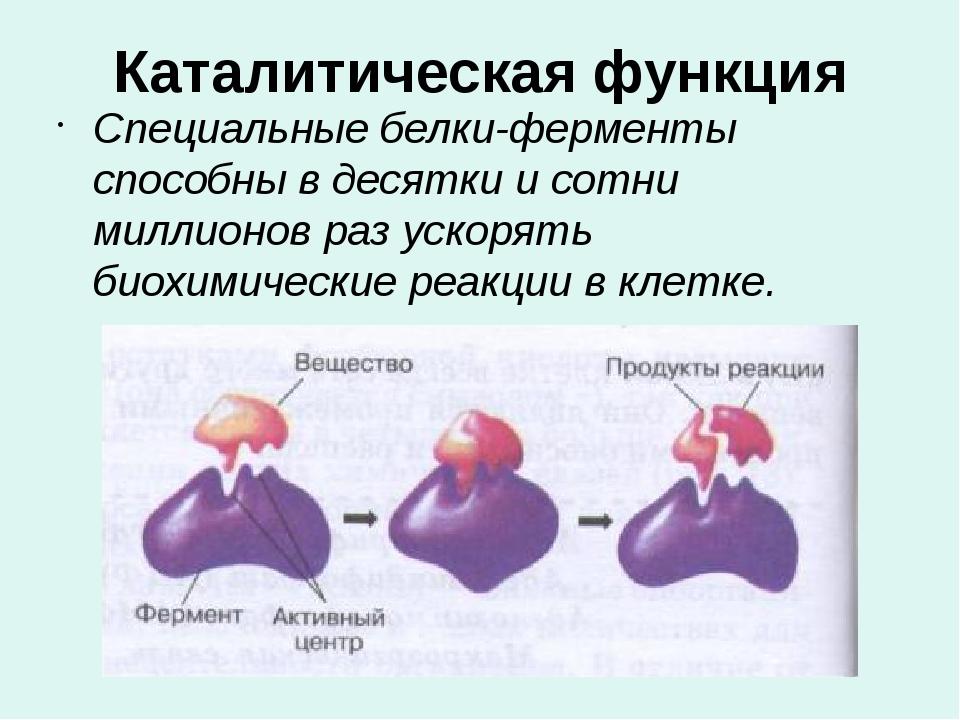 Каталитическая функция Специальные белки-ферменты способны в десятки и сотни...