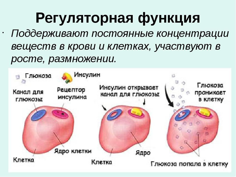 Регуляторная функция Поддерживают постоянные концентрации веществ в крови и к...