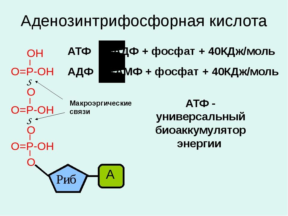 Аденозинтрифосфорная кислота Макроэргические связи АТФ АДФ + фосфат + 40КДж/м...