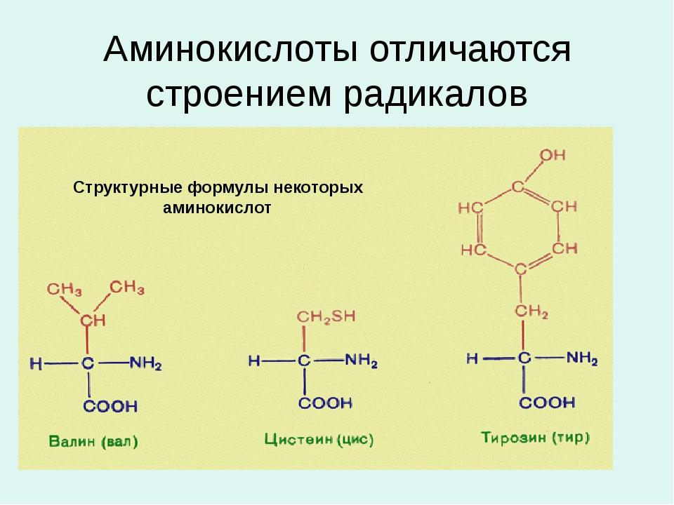Аминокислоты отличаются строением радикалов Структурные формулы некоторых ами...