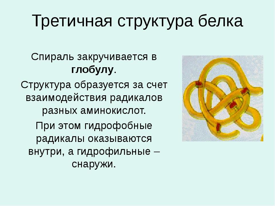 Третичная структура белка Спираль закручивается в глобулу. Структура образует...