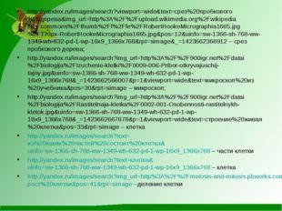 http://yandex.ru/images/search?viewport=wide&text=срез%20пробкового%20дерева&