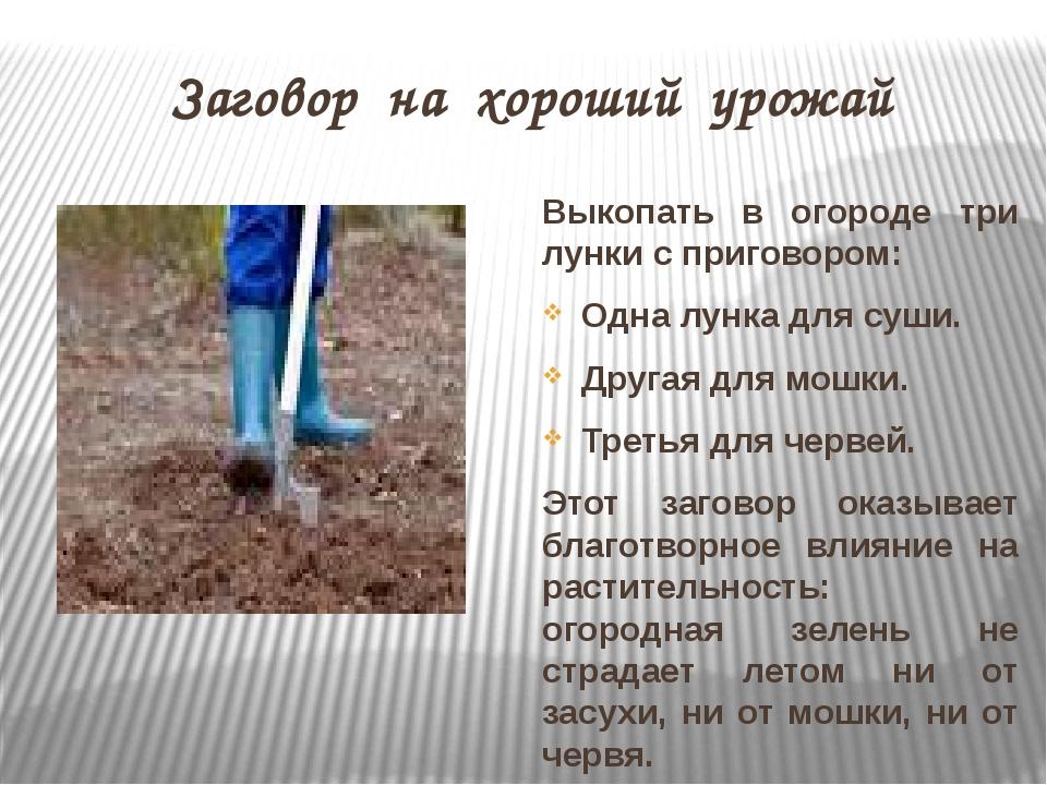 Заговор на хороший урожай Выкопать в огороде три лунки с приговором: Одна лун...