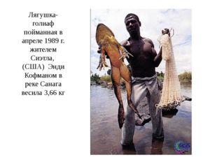 Лягушка-голиаф пойманная в апреле 1989 г. жителем Сиэтла, (США) Энди Кофманом