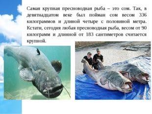 Самая крупная пресноводная рыба – это сом. Так, в девятнадцатом веке был пойм