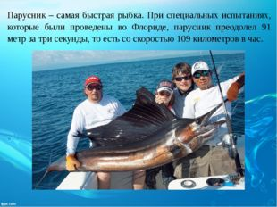 Парусник – самая быстрая рыбка. При специальных испытаниях, которые были пров