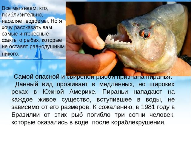 Самой опасной и свирепой рыбой признана пиранья. Данный вид проживает в медле...