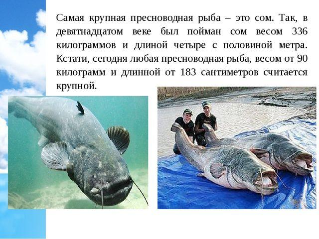 Самая крупная пресноводная рыба – это сом. Так, в девятнадцатом веке был пойм...