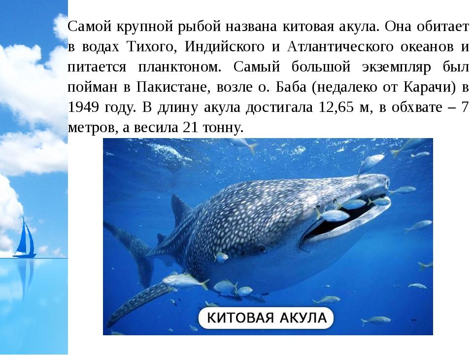 Самой крупной рыбой названа китовая акула. Она обитает в водах Тихого, Индийс...