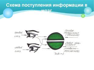 Схема поступления информации в мозг