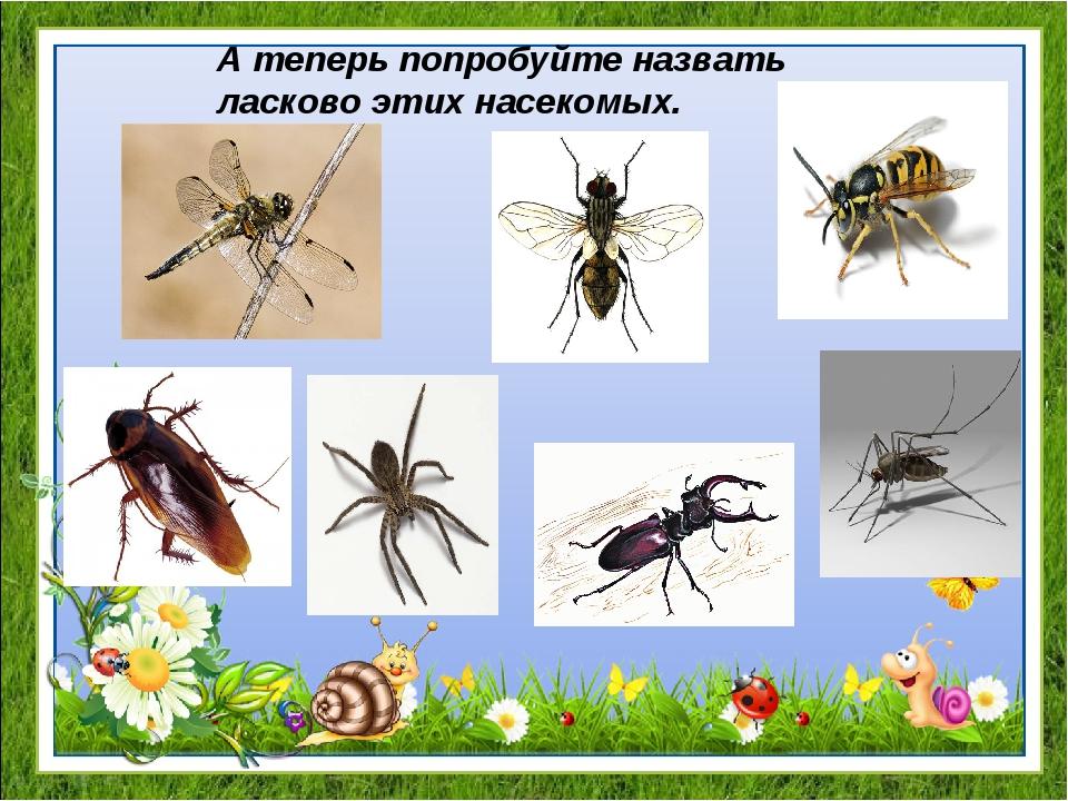 А теперь попробуйте назвать ласково этих насекомых.