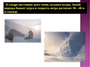 В тундре постоянно дуют очень сильные ветры. Зимой нередко бывает пурга и ск