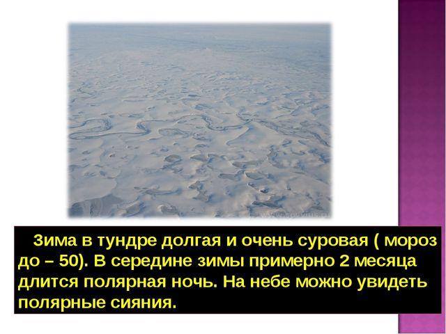 Зима в тундре долгая и очень суровая ( мороз до – 50). В середине зимы приме...