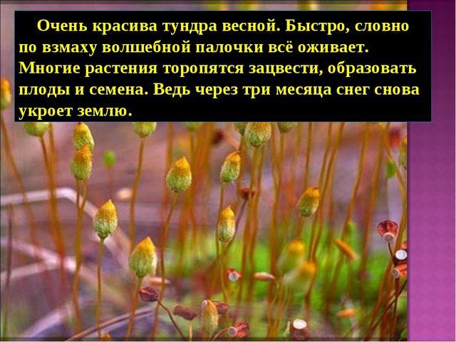Очень красива тундра весной. Быстро, словно по взмаху волшебной палочки всё...