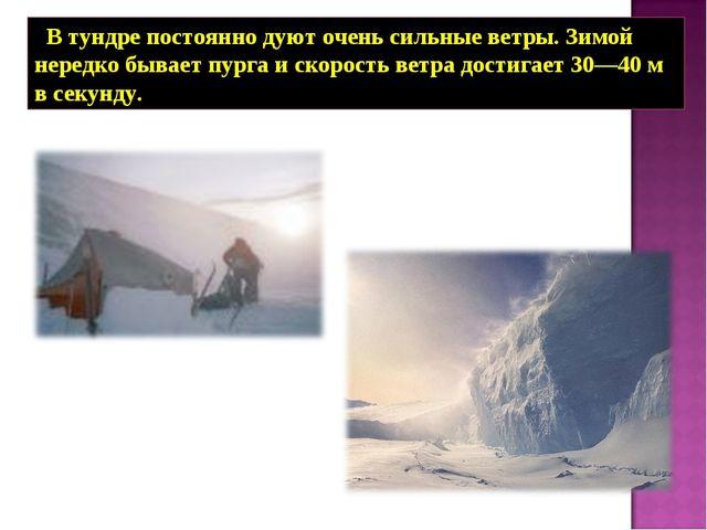В тундре постоянно дуют очень сильные ветры. Зимой нередко бывает пурга и ск...