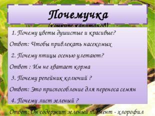 Почемучка (конкурс капитанов) 1. Почему цветы душистые и красивые? Ответ: Что