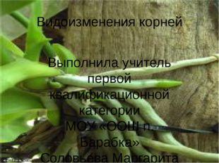 Видоизменения корней Выполнила учитель первой квалификационной категории МОУ