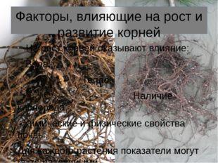Факторы, влияющие на рост и развитие корней На рост корней оказывают влияние: