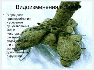 Видоизменения корней В процессе приспособления к условиям существования корни