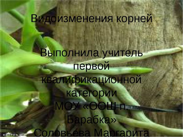 Видоизменения корней Выполнила учитель первой квалификационной категории МОУ...