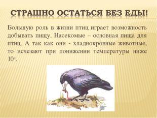 Большую роль в жизни птиц играет возможность добывать пищу. Насекомые – осно