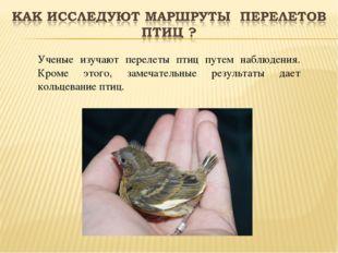 Ученые изучают перелеты птиц путем наблюдения. Кроме этого, замечательные рез