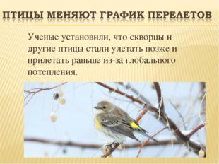 Ученые установили, что скворцы и другие птицы стали улетать позже и прилетат