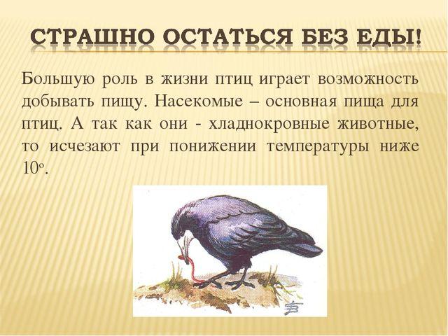 Большую роль в жизни птиц играет возможность добывать пищу. Насекомые – осно...