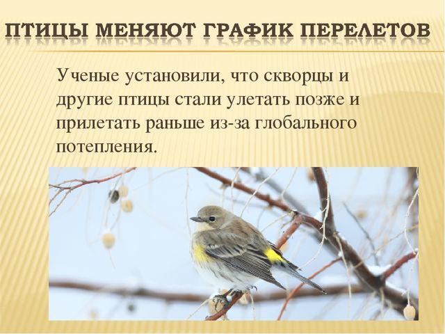 Ученые установили, что скворцы и другие птицы стали улетать позже и прилетат...