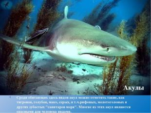 Среди обитающих здесь видов акул можно отметить такие, кактигровая,голубая,