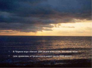 В Чёрном море обитает 2500 видов животных. Это очень мало (для сравнения, в С