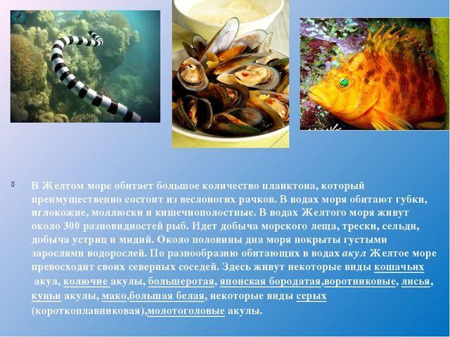 В Желтом море обитает большое количество планктона, который преимущественно с...