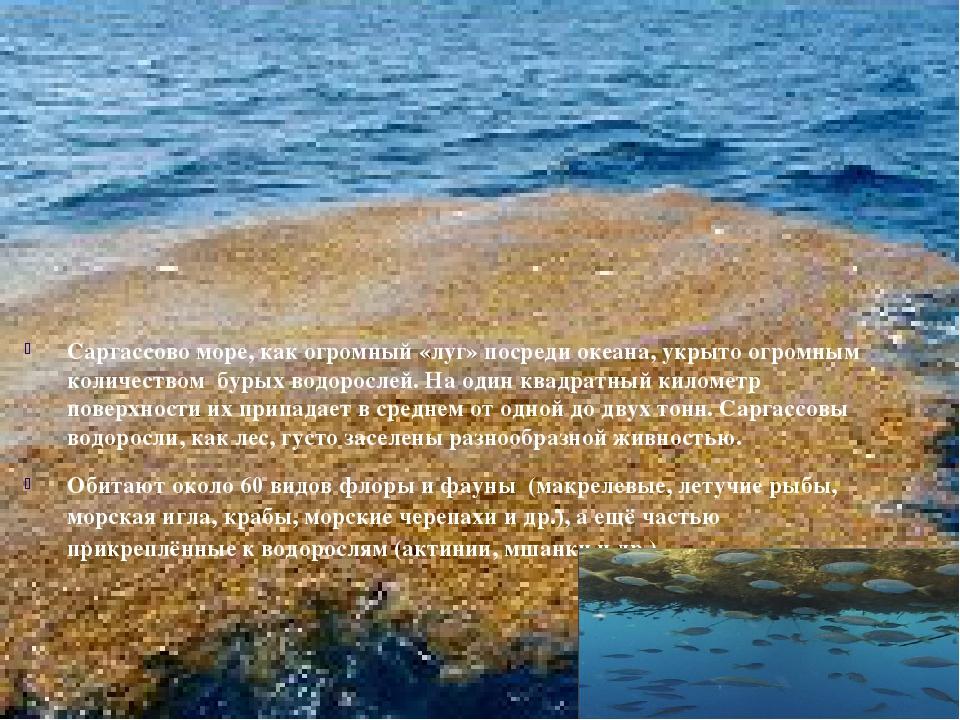 Саргассово море, как огромный «луг» посреди океана, укрыто огромным количест...